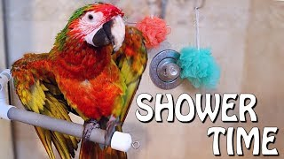 my-bird-loves-taking-showers-and-quick-update-of-all-the-animals