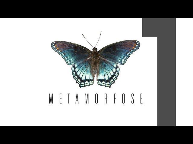 METAMORFOSE - 1 de 4 - De Dentro Pra Fora