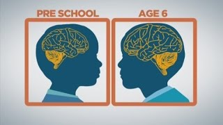 How baby brains develop