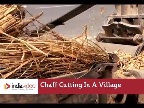 Chaff Cutting in a village near Patna