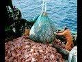 Double trawling in indian ocean......|||