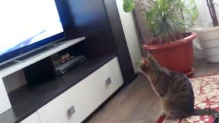 Купил коту игрушку ))))