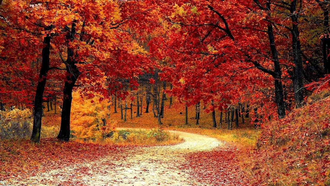 Acoustic Folk Music - Appalachian Trail - Guitar & Banjo Autumn Music Mix