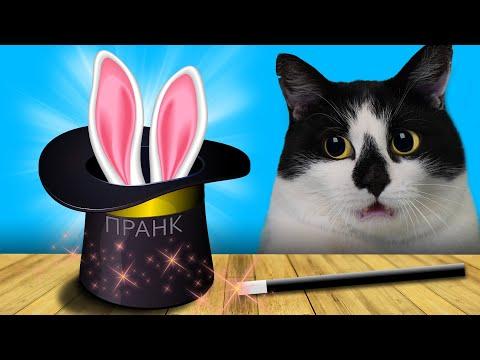 СМЕШНЫЕ ПРАНКИ для КОТОВ ФОКУСАМИ ! 6 ТРЮКОВ ЧТОБЫ УДИВИТЬ ДРУЗЕЙ! НОВЫЕ ПРИКОЛЫ с Котами