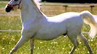 se vende un caballo vicente fernandez