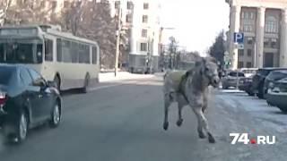 Челябинская лошадь бросилась под троллейбус
