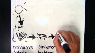 Food Chain-Energy Transfer