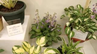 """Выставка """"Декоративно-лиственные растения"""""""