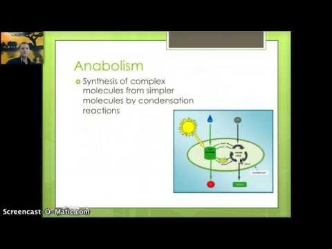 IB 2.1 - Molecules to Metabolism