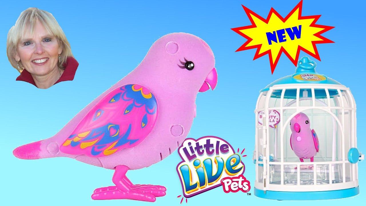 little live pets bird manual