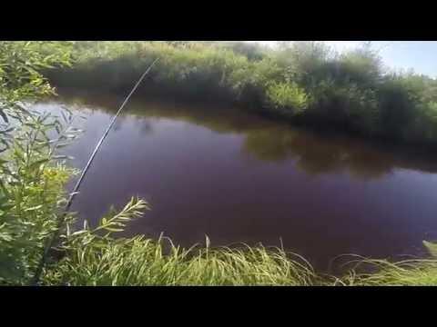 плотва весной на удочку в озерах видео