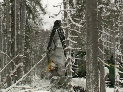Лесопромышленники Вытегры увеличивают объемы производства