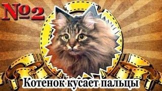 Котенок кусает пальцы
