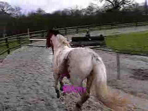Nos chevaux puissance saut d 39 obstacle youtube - Frison saut d obstacle ...