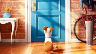 Мнение о фильме - Тайная жизнь домашних животных