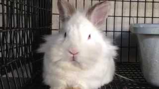 Boppity Bunny - Filmed at the Santa Barbara Bunny Shelter