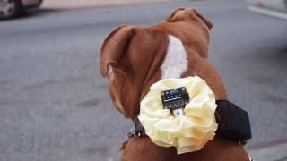 Gps Dog Collar