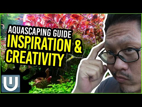 Aquascaping Guide - Inspiration and Creativity