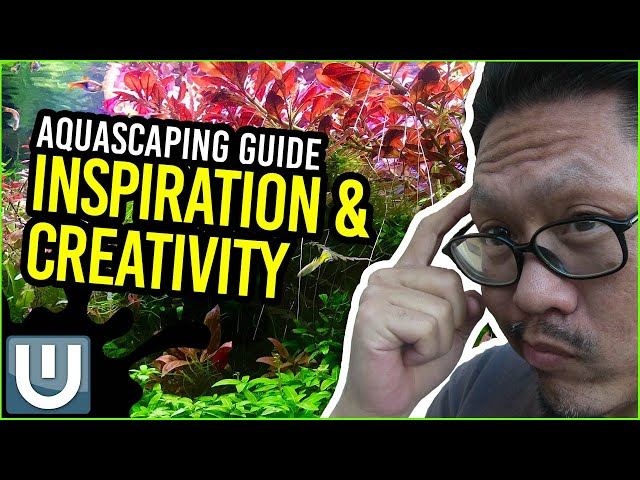 Aquascaping Guide - Inspiration and Creativity | Part 01