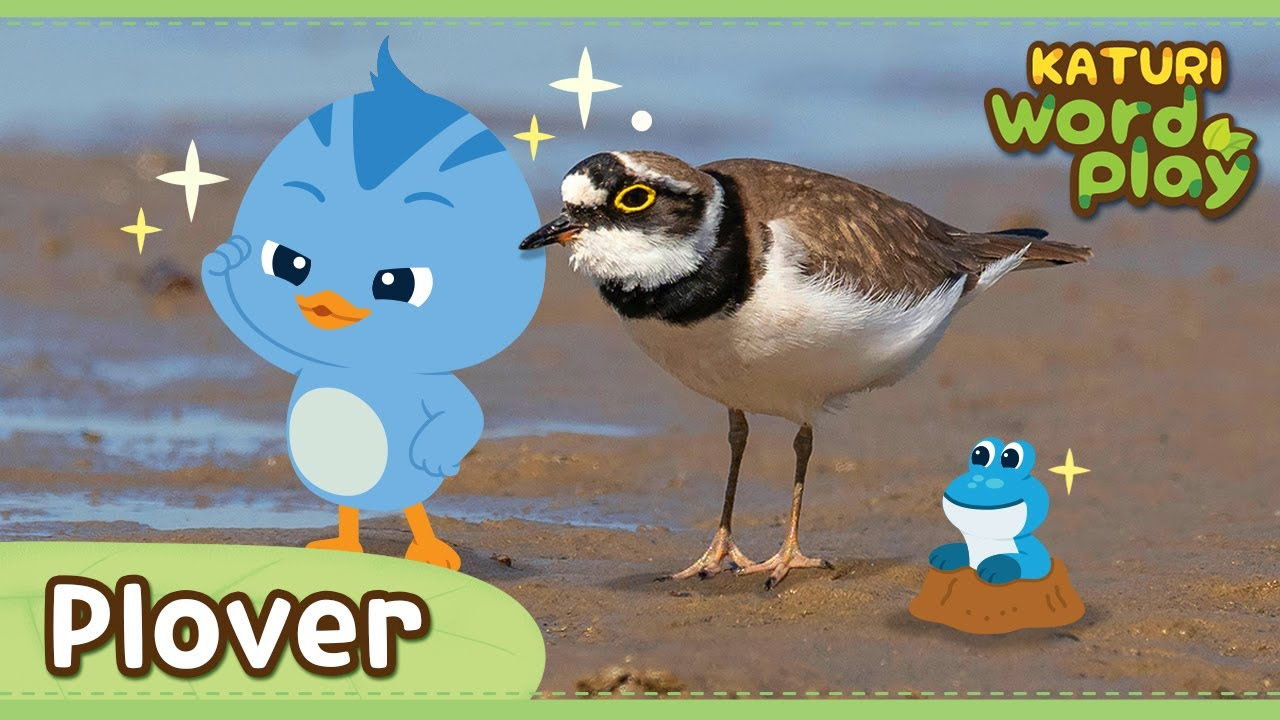 * plover *   Katuri Word Play   Learn Animals   Animals for kids to learn