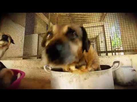 Câmera Record Visita A Casa De Uma Mulher Que Abriga Mais De Duzentos Cães