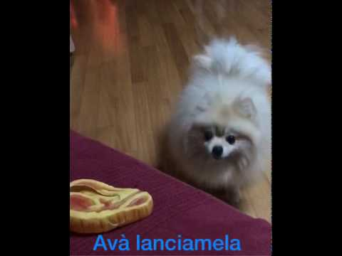 cane parla talking dog