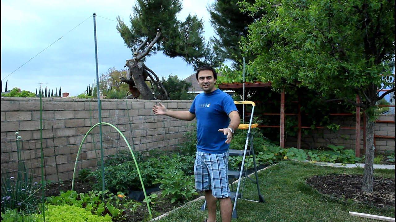 How To Build Tomato String Trellis Vertical Gardening With California  Gardener   YouTube