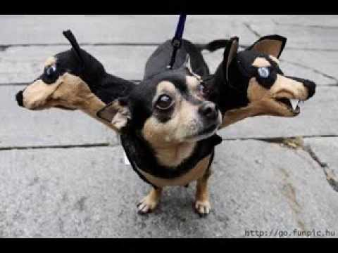 Very funny dog costumes pictures gallery & Very funny dog costumes pictures gallery - YouTube