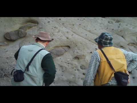 Dinosaur burrow discovered in Australia