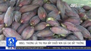 Thương lái mua hoa chuối non giá cao bất thường | VTC