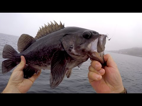 Catching BIG Rockfish & Perch In The Puget Sound!