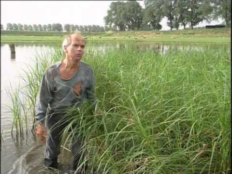Job op Schokland - door Henk van Ulsen en Adriaan Valk