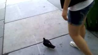 Chasing a big fat bird