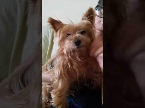Moki, rescued from Miami Dade Animal Shelter