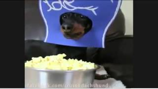 Ruff Luck! Crusoe The Dachshund Consoles Himself With Popcorn As He Watches The Seahawks Defeated B