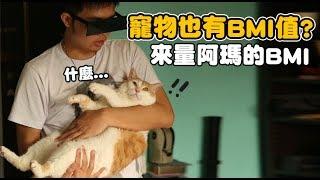 【黃阿瑪的後宮生活】寵物也有BMI值?來量阿瑪的吧!