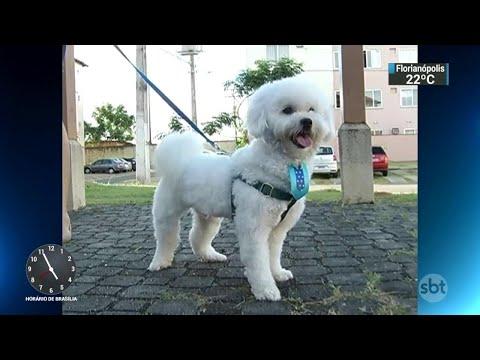 Seu pet tem ansiedade? Aprenda a identificar e tratar a doença   SBT Notícias (02/05/18)