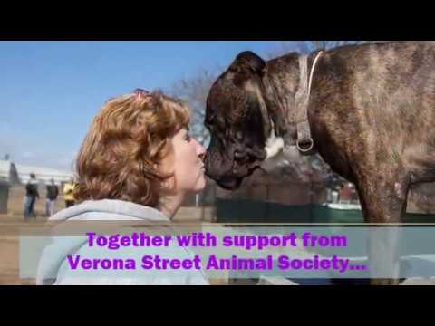 Rochester Animal Services 2016 Year In Review