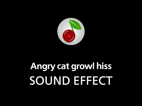 Angry cat growl hiss, SOUND EFFECT