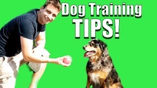 Dog Training Tips For A More Obedient Dog!