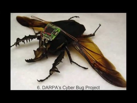 ka4katv 10 Bizarre Attempts to Weaponize Insects