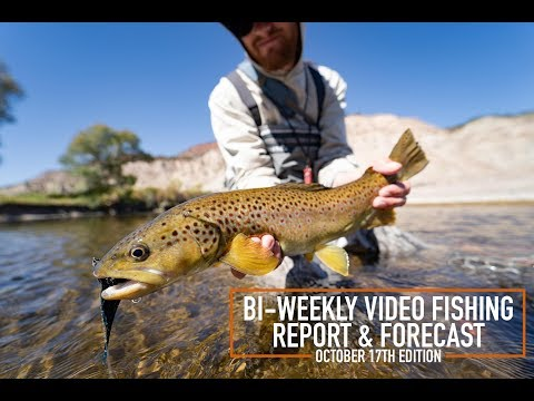 bi-weekly-video-fishing-report-&-forecast---october-17th-edition