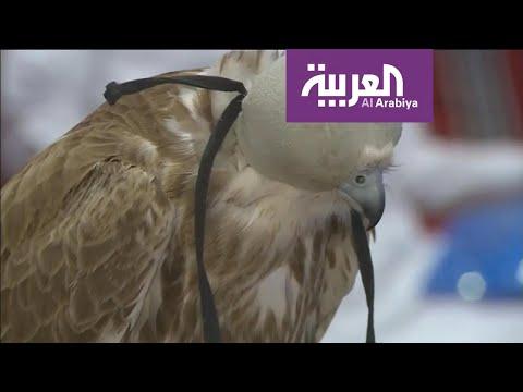معرض الصقور والصيد يسجل نجاح باهر ضمن موسم الرياض  - نشر قبل 19 دقيقة