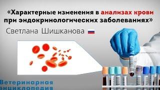 видео «Дерматология и эндокринология. Базовый уровень»