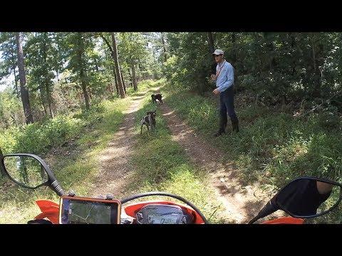honda-crf250l-madison-county-wma-trails
