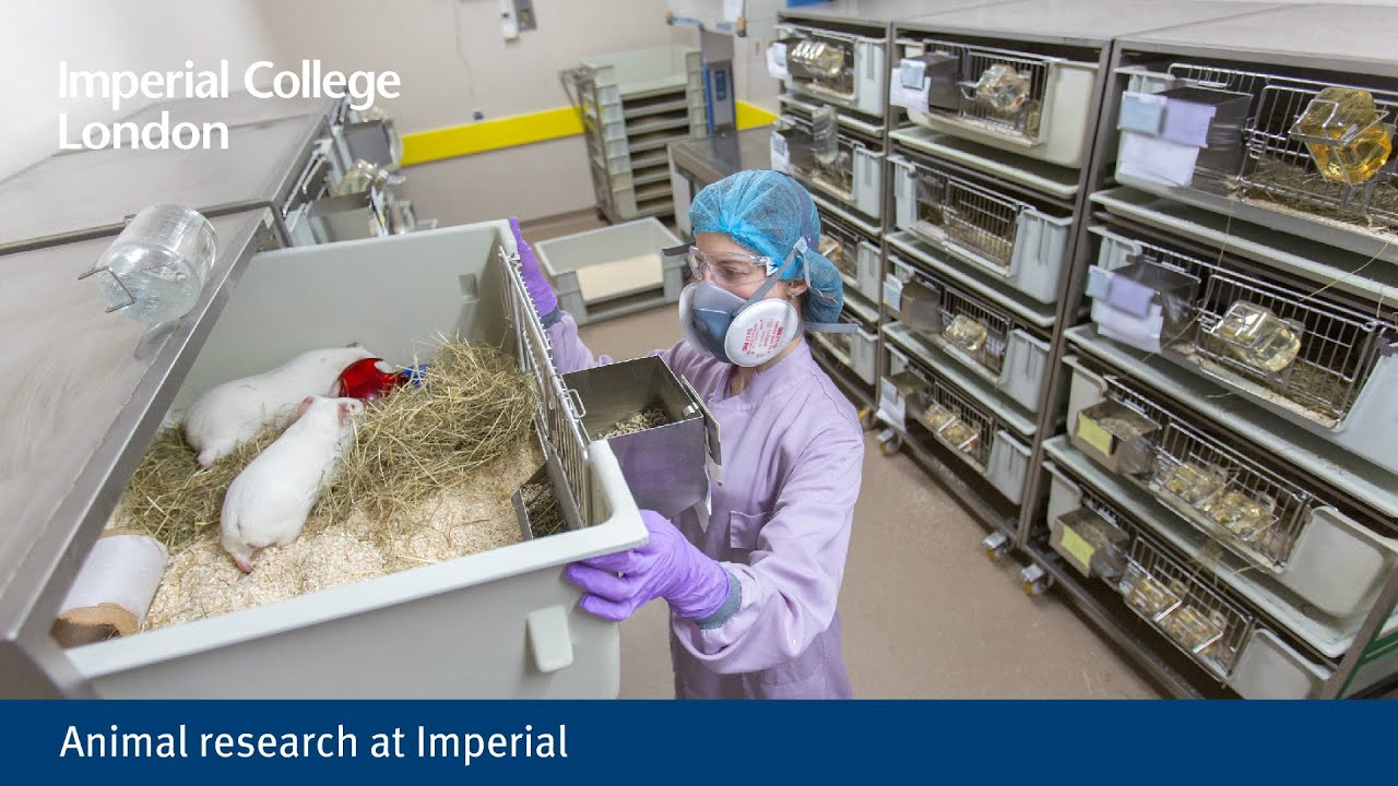Animal research at Imperial