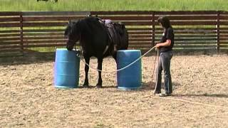 How to train a horse that is claustrophobic!