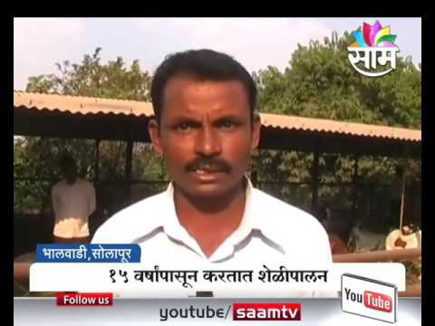 #Agrowon: Success Story of Namdeo Sable of Goat Farming in Bhalewadi, Solapur