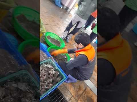 Korean fish market handling of plaice