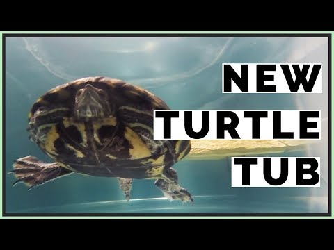 indoor-150-gallon-turtle-tub-for-red-eared-slider!